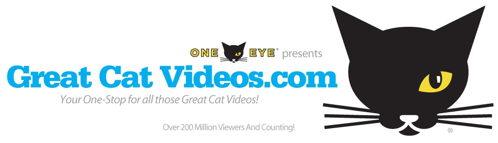 Great Cat Videos
